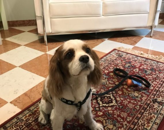 hotel pet friend albergo-fontana-verona